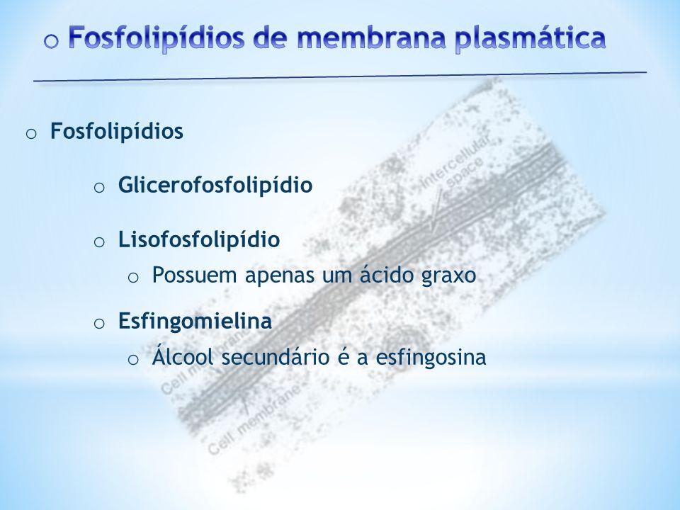 Fosfolipídios de membrana plasmática
