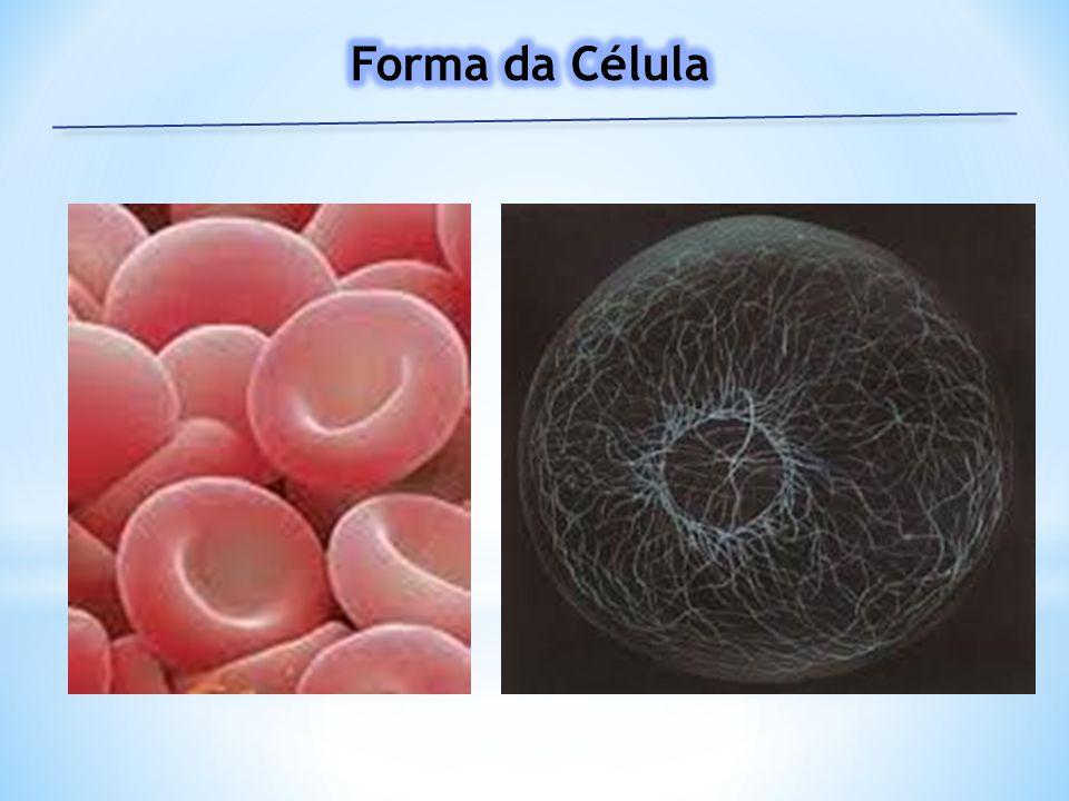 Forma da Célula