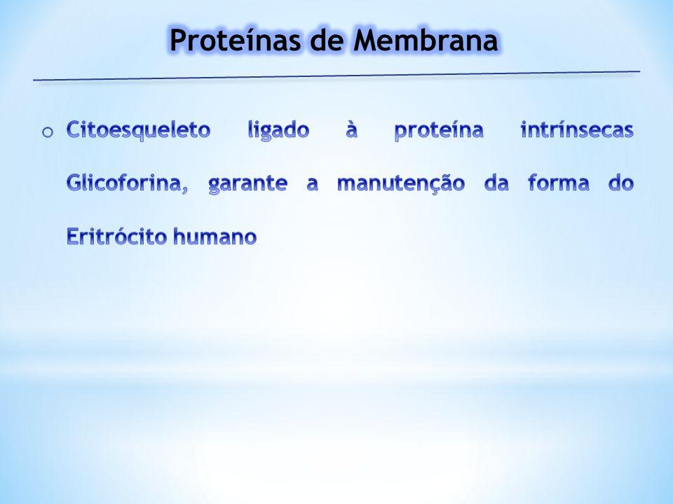 Proteínas de Membrana Citoesqueleto ligado à proteína intrínsecas Glicoforina, garante a manutenção da forma do Eritrócito humano.
