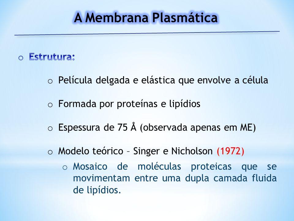 A Membrana Plasmática Estrutura: