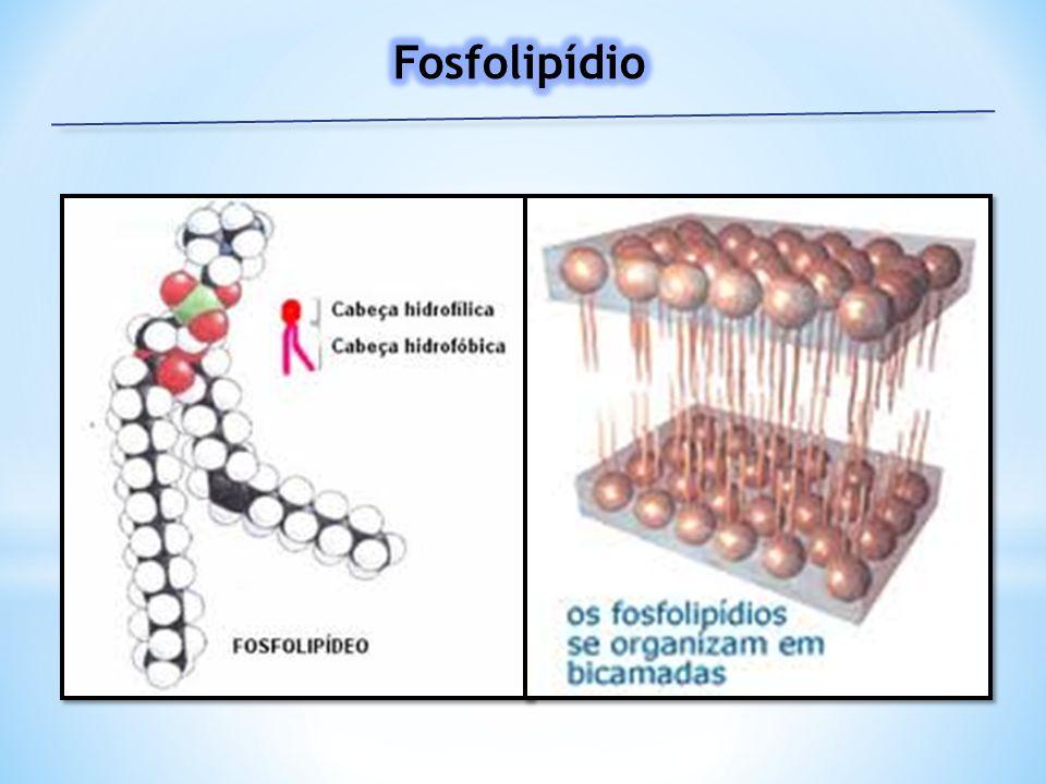 Fosfolipídio