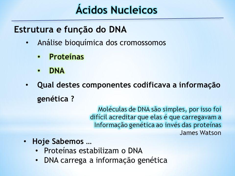 Ácidos Nucleicos Estrutura e função do DNA