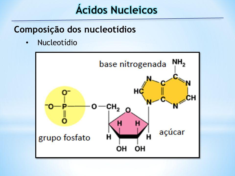 Ácidos Nucleicos Composição dos nucleotídios Nucleotídio