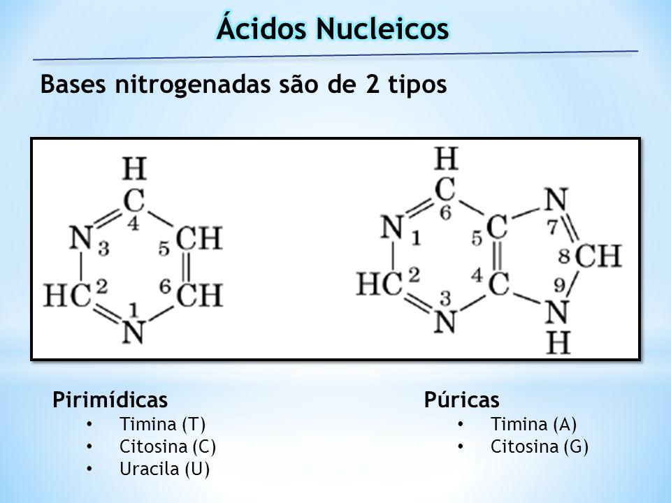 Ácidos Nucleicos Bases nitrogenadas são de 2 tipos Pirimídicas Púricas