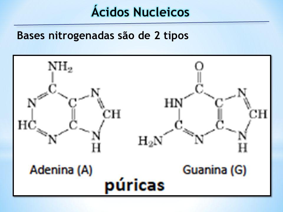 Ácidos Nucleicos Bases nitrogenadas são de 2 tipos