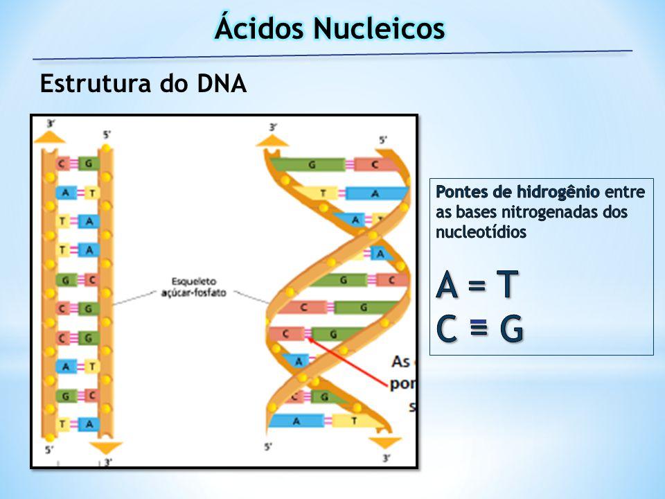 A = T C = G Ácidos Nucleicos Estrutura do DNA