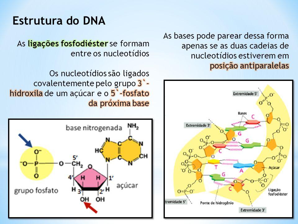 Estrutura do DNA As bases pode parear dessa forma apenas se as duas cadeias de nucleotídios estiverem em.