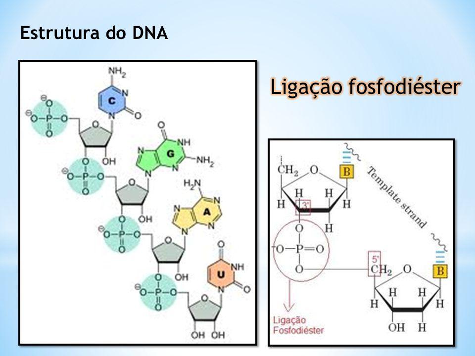 Estrutura do DNA Ligação fosfodiéster
