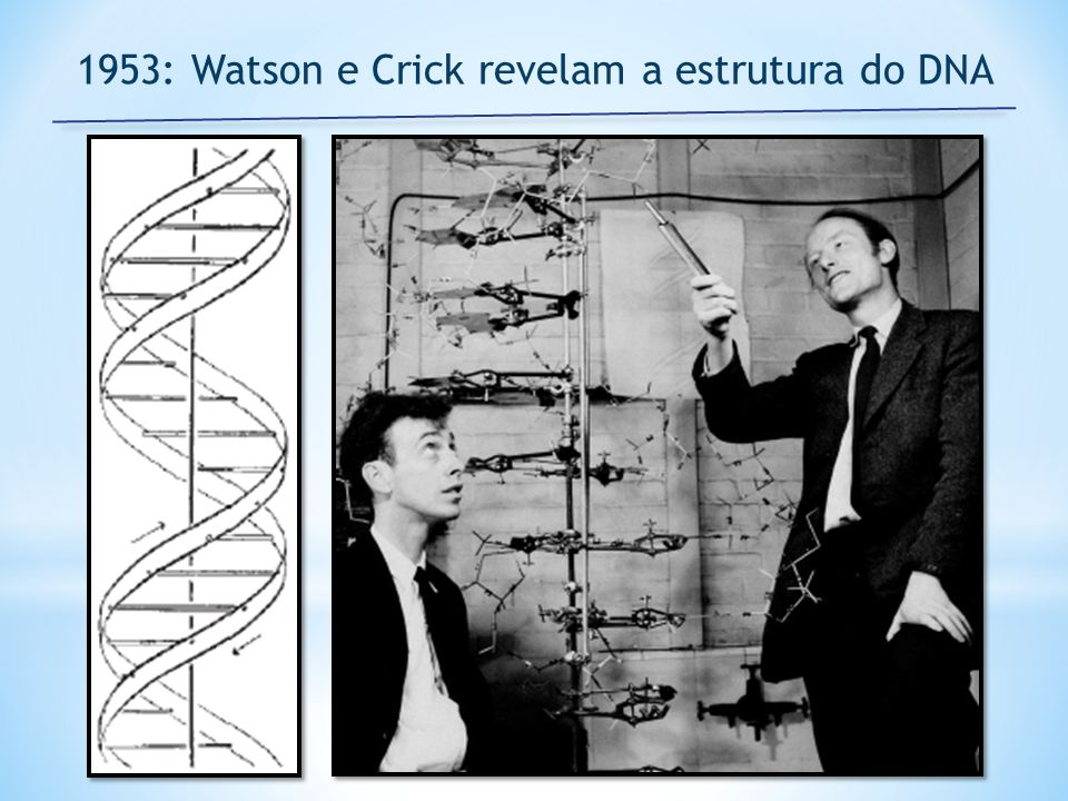 1953: Watson e Crick revelam a estrutura do DNA