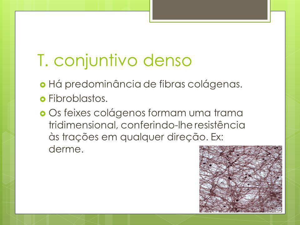 T. conjuntivo denso Há predominância de fibras colágenas.
