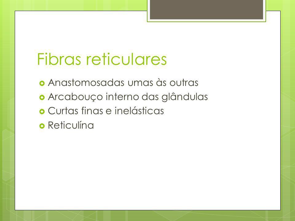 Fibras reticulares Anastomosadas umas às outras