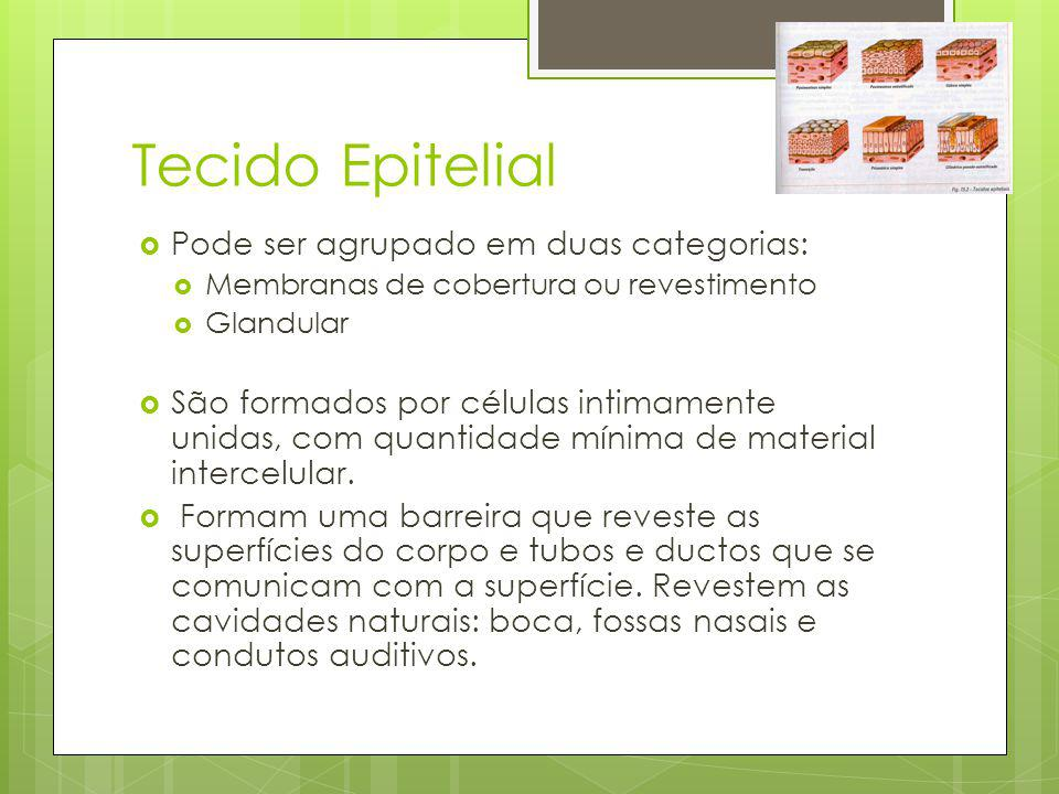 Tecido Epitelial Pode ser agrupado em duas categorias:
