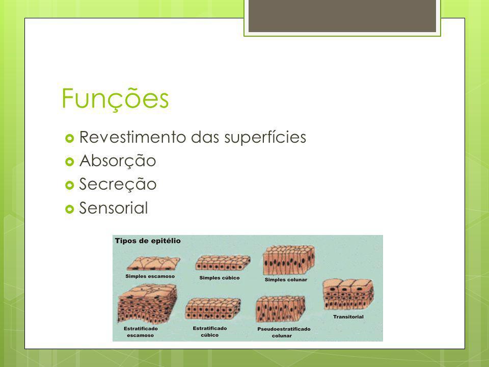Funções Revestimento das superfícies Absorção Secreção Sensorial