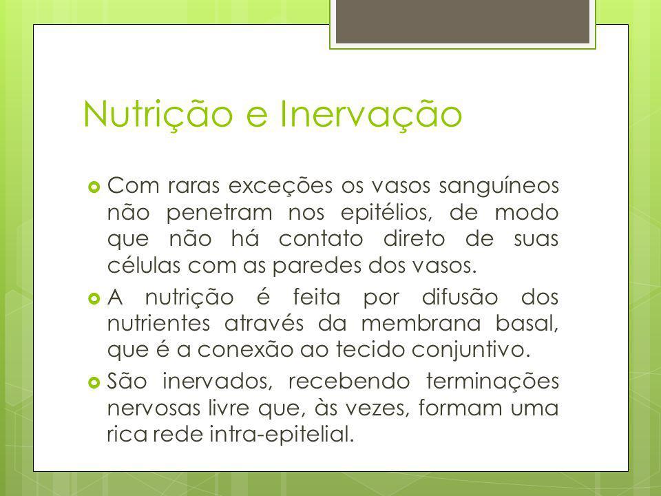 Nutrição e Inervação