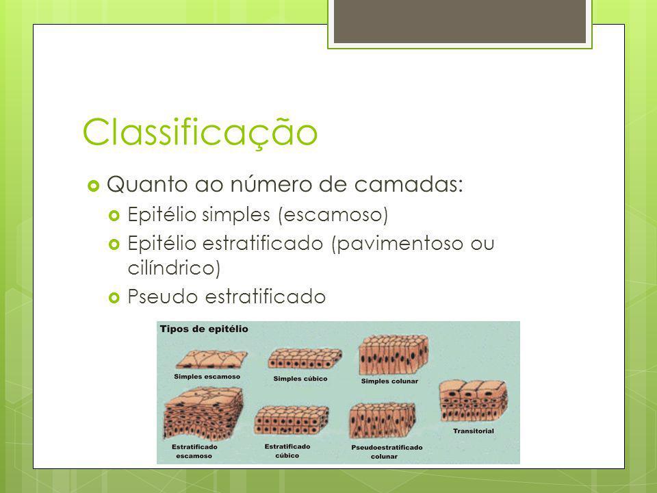 Classificação Quanto ao número de camadas: Epitélio simples (escamoso)