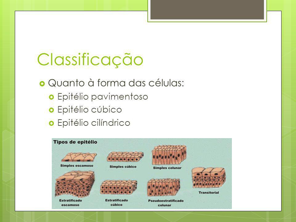 Classificação Quanto à forma das células: Epitélio pavimentoso