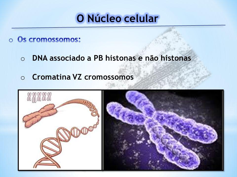 O Núcleo celular Os cromossomos: