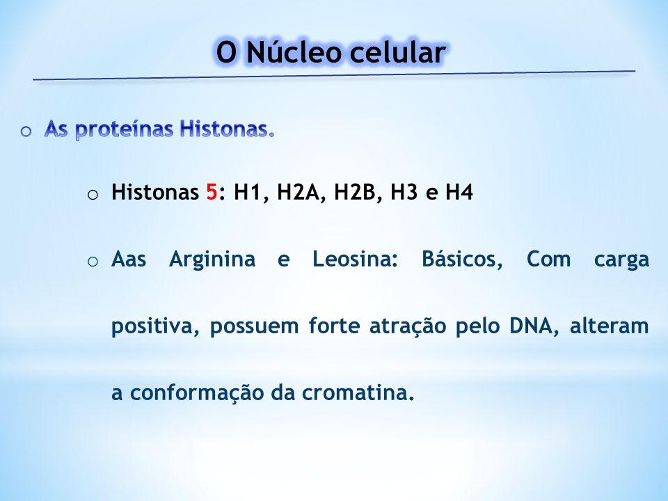 O Núcleo celular As proteínas Histonas.