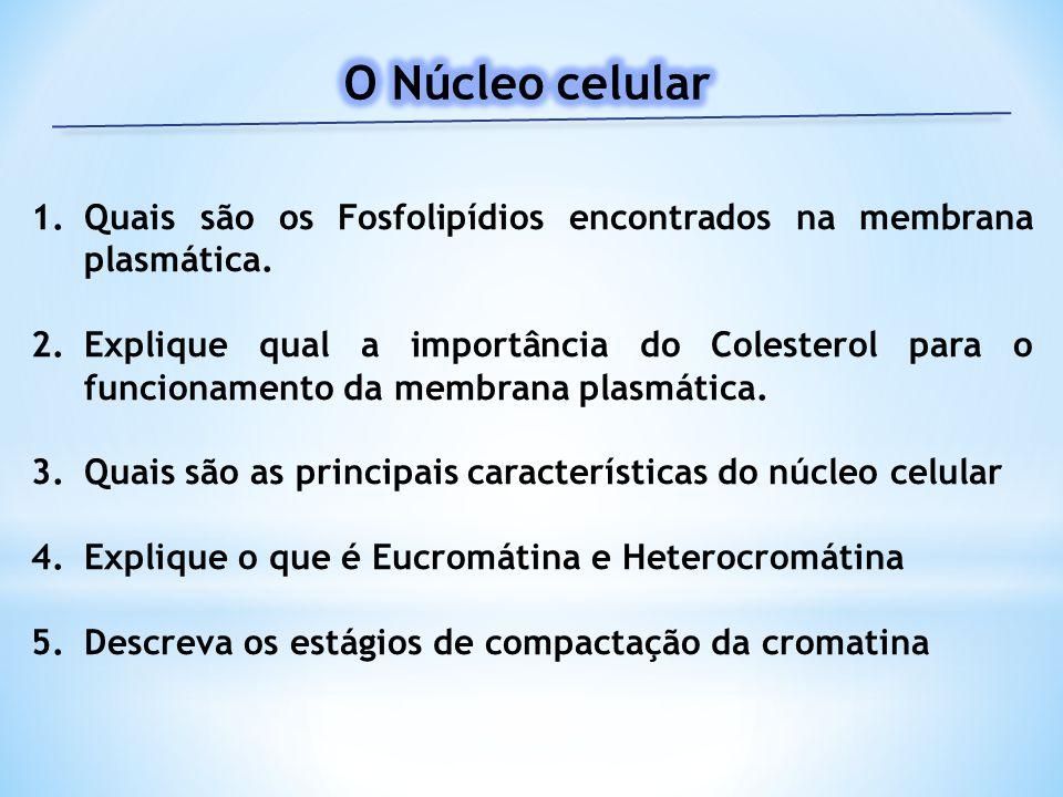 O Núcleo celular Quais são os Fosfolipídios encontrados na membrana plasmática.