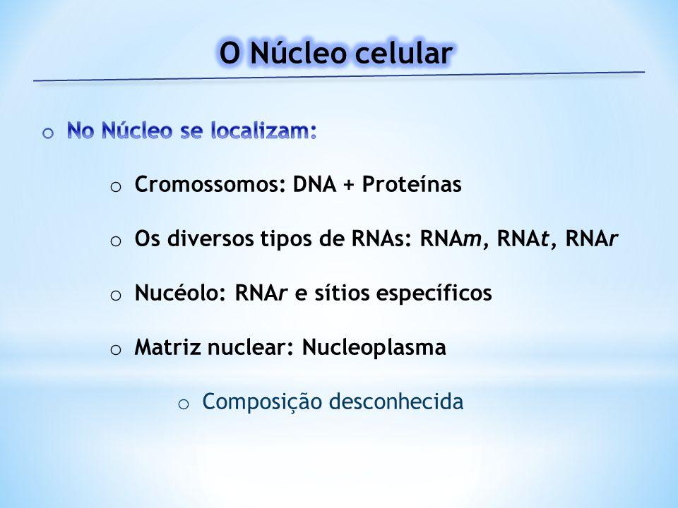 O Núcleo celular No Núcleo se localizam: Cromossomos: DNA + Proteínas