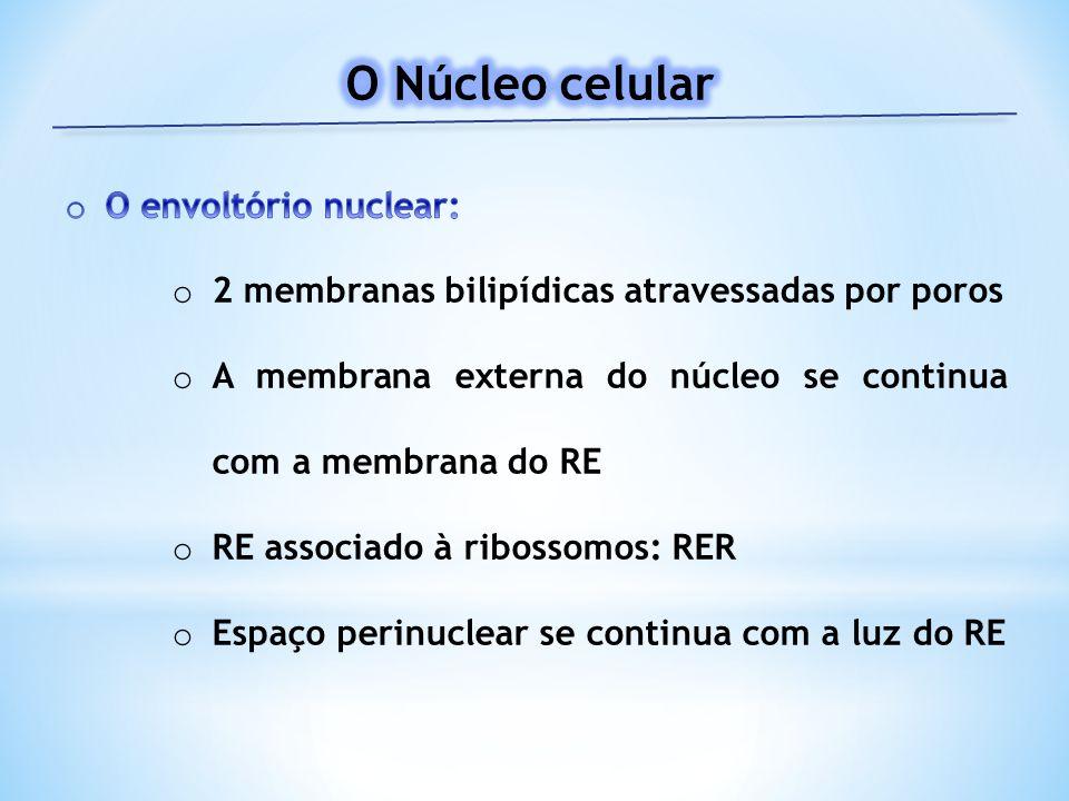 O Núcleo celular O envoltório nuclear: