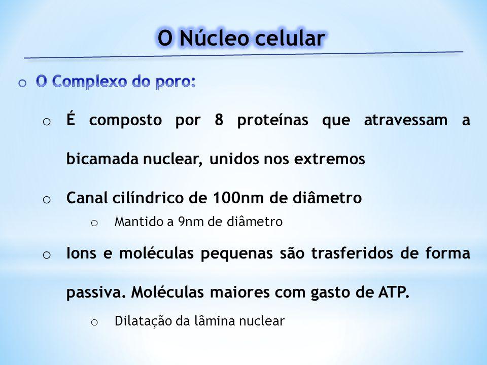 O Núcleo celular O Complexo do poro: