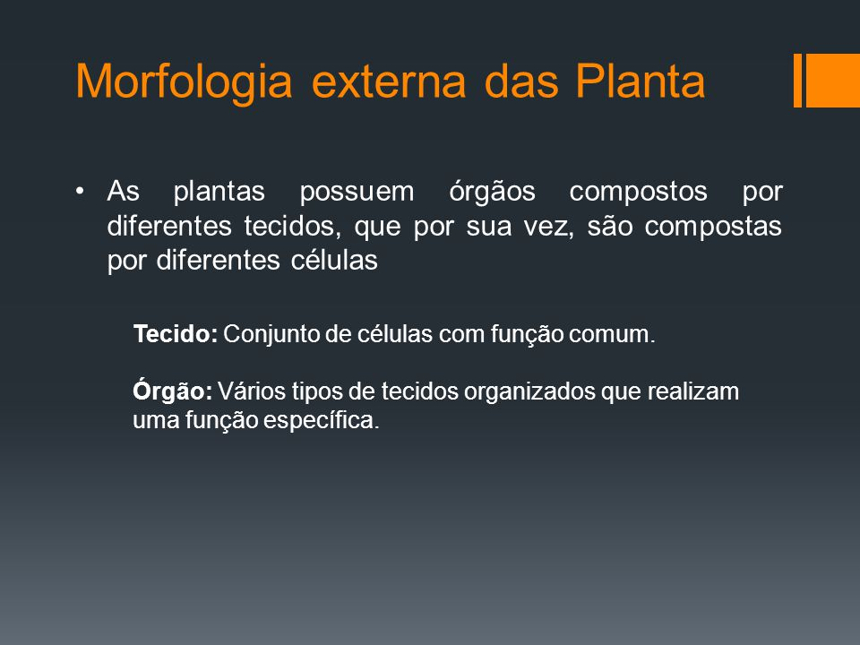 Morfologia externa das Planta