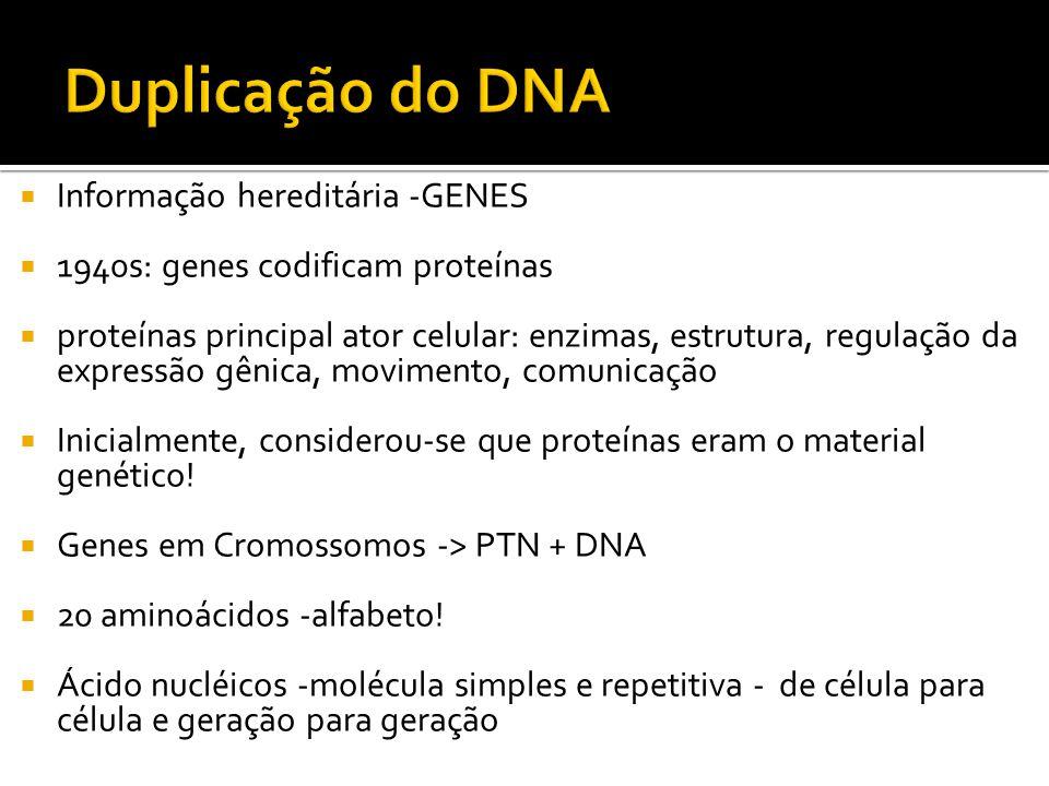 Duplicação do DNA Informação hereditária -GENES