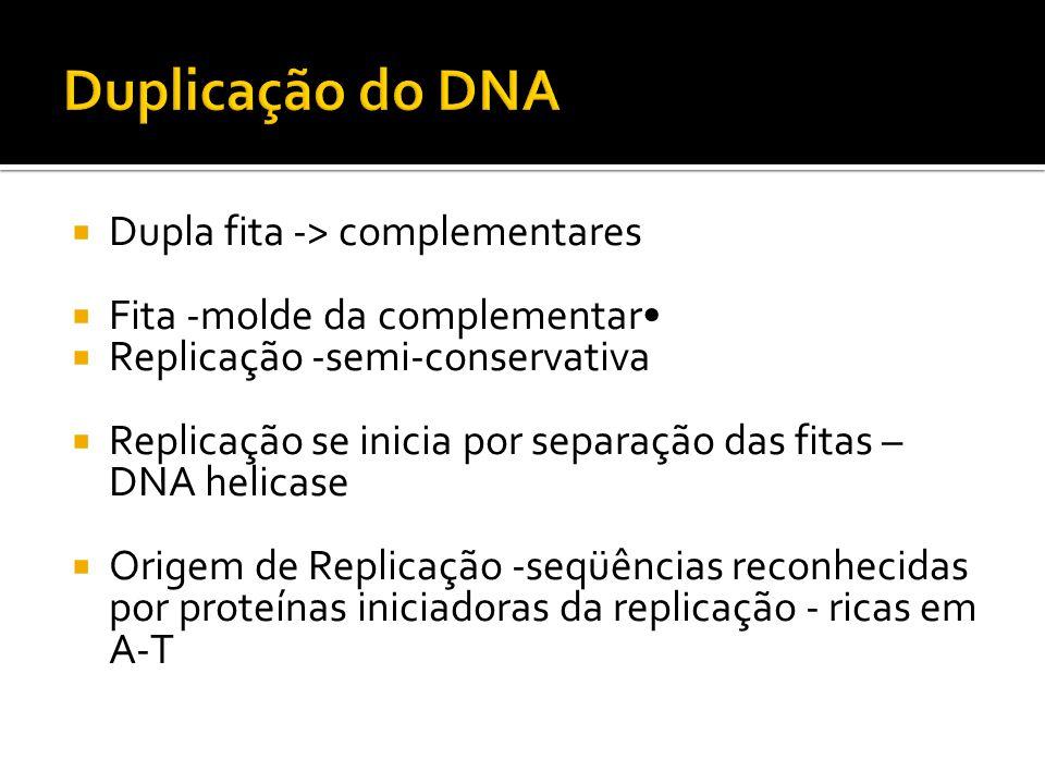 Duplicação do DNA Dupla fita -> complementares