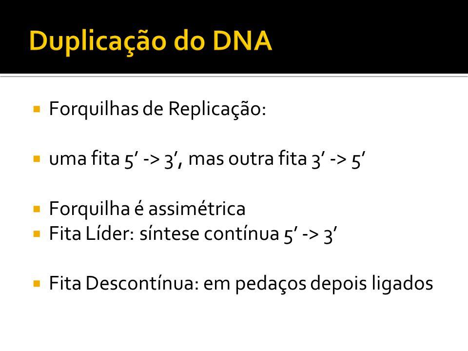 Duplicação do DNA Forquilhas de Replicação: