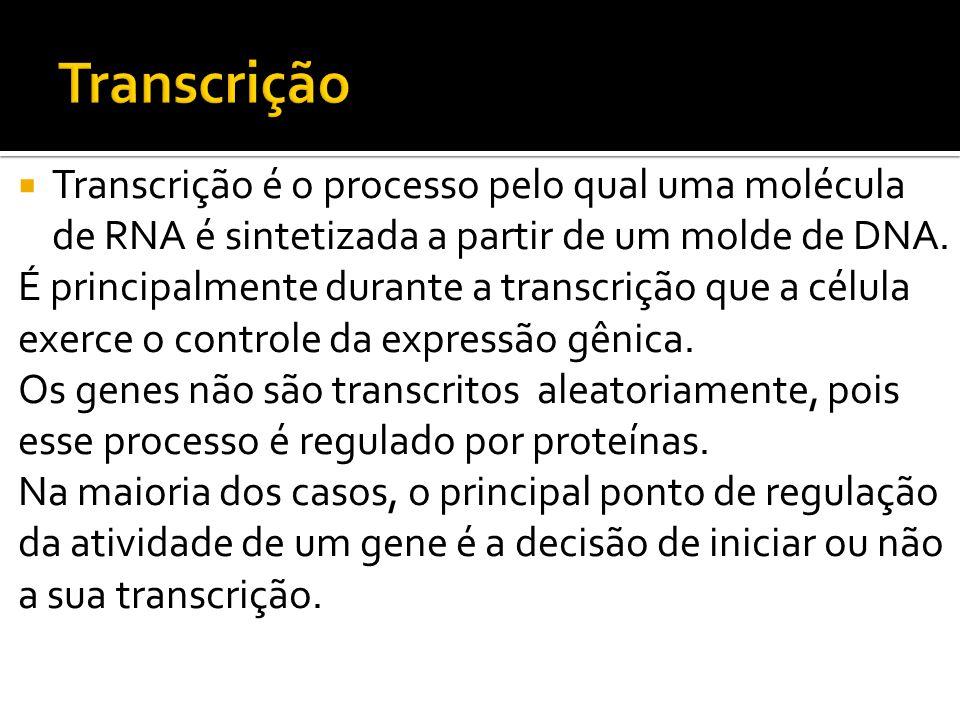 Transcrição Transcrição é o processo pelo qual uma molécula de RNA é sintetizada a partir de um molde de DNA.