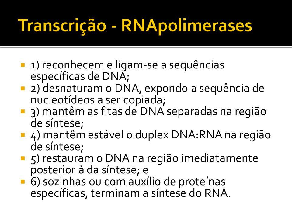 Transcrição - RNApolimerases