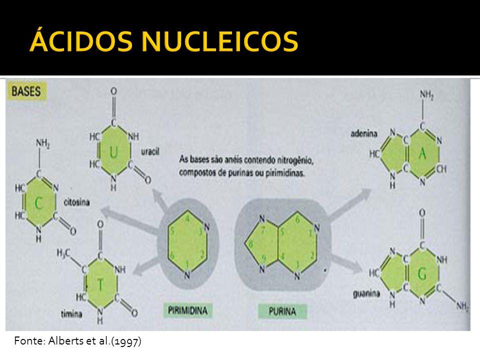 ÁCIDOS NUCLEICOS Fonte: Alberts et al.(1997)