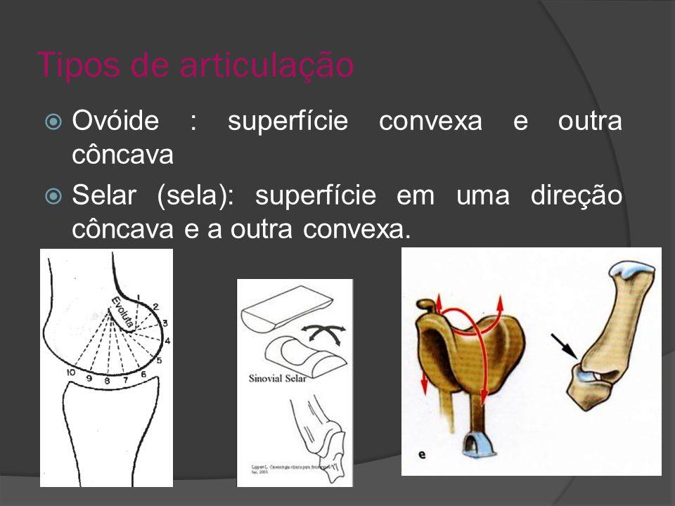 Tipos de articulação Ovóide : superfície convexa e outra côncava
