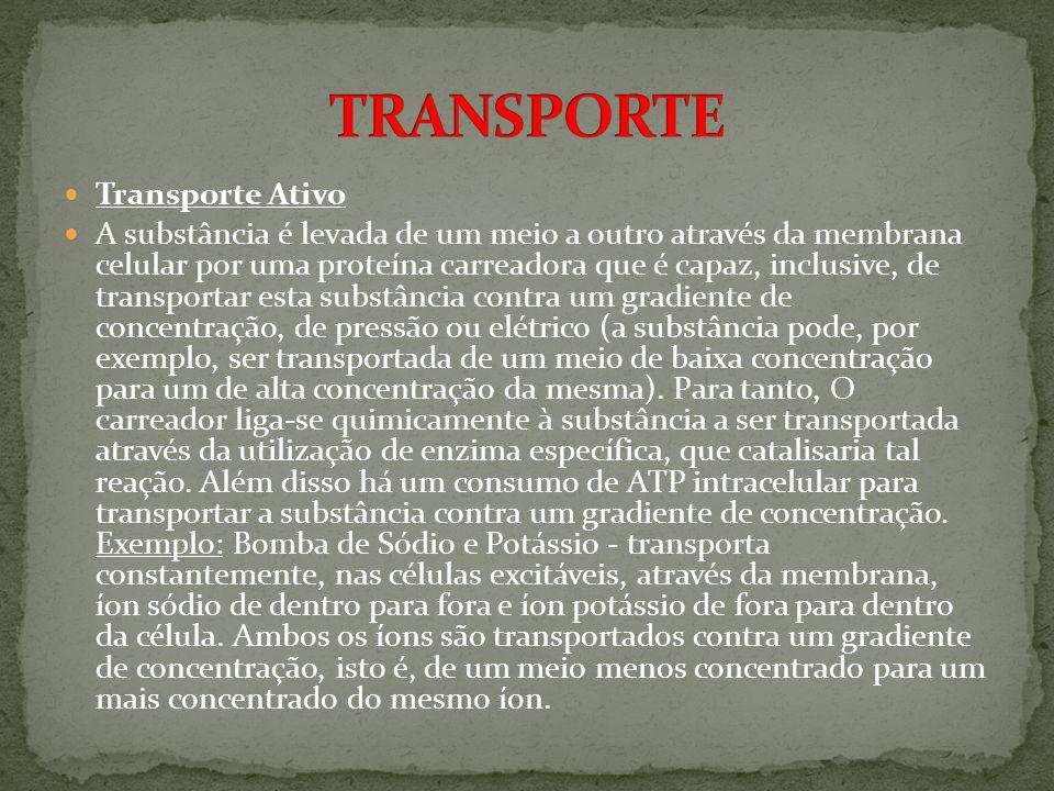 TRANSPORTE Transporte Ativo