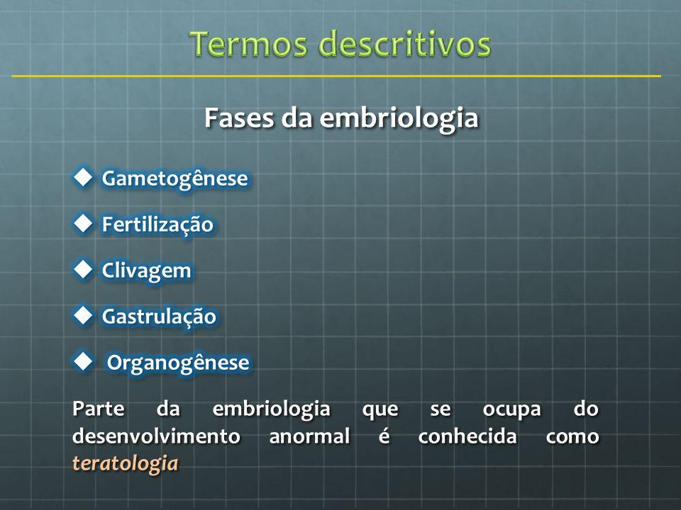 Termos descritivos Fases da embriologia Gametogênese Fertilização