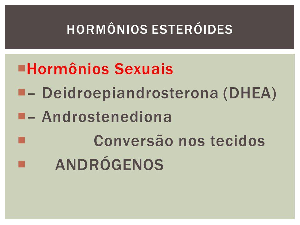 – Deidroepiandrosterona (DHEA) – Androstenediona Conversão nos tecidos
