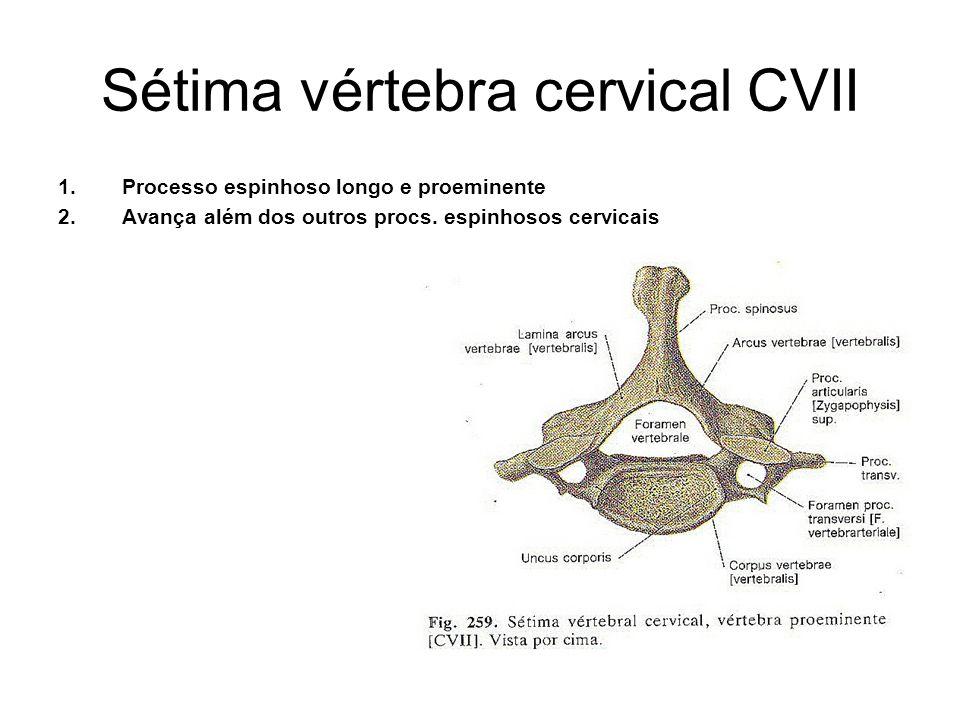 Sétima vértebra cervical CVII
