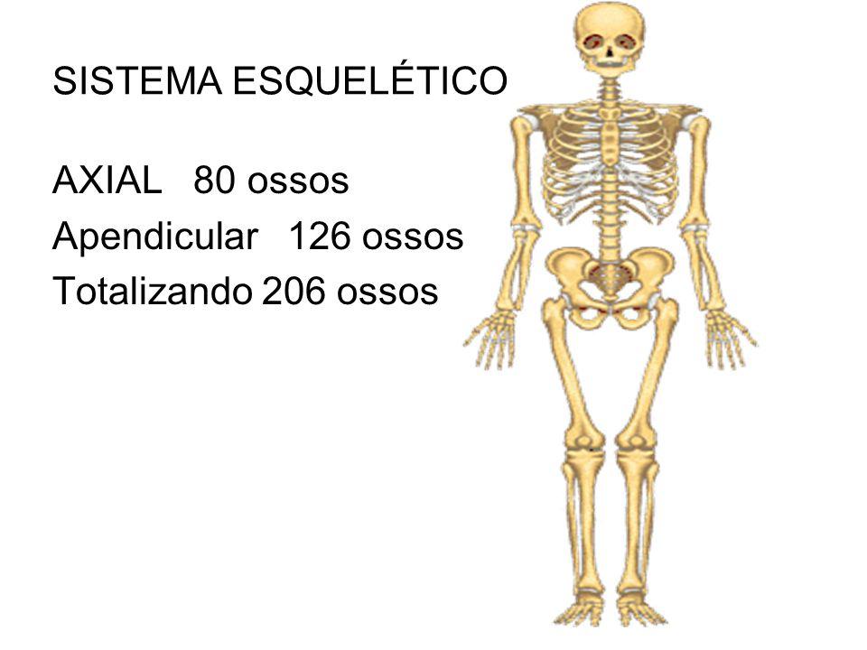 Famoso Finalidad Sistema Esquelético Patrón - Anatomía de Las ...
