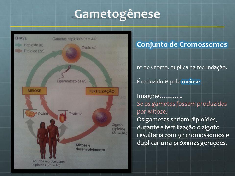Conjunto de Cromossomos