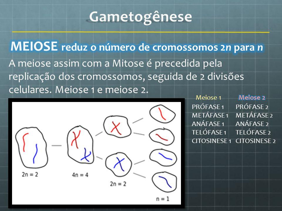 Gametogênese MEIOSE reduz o número de cromossomos 2n para n