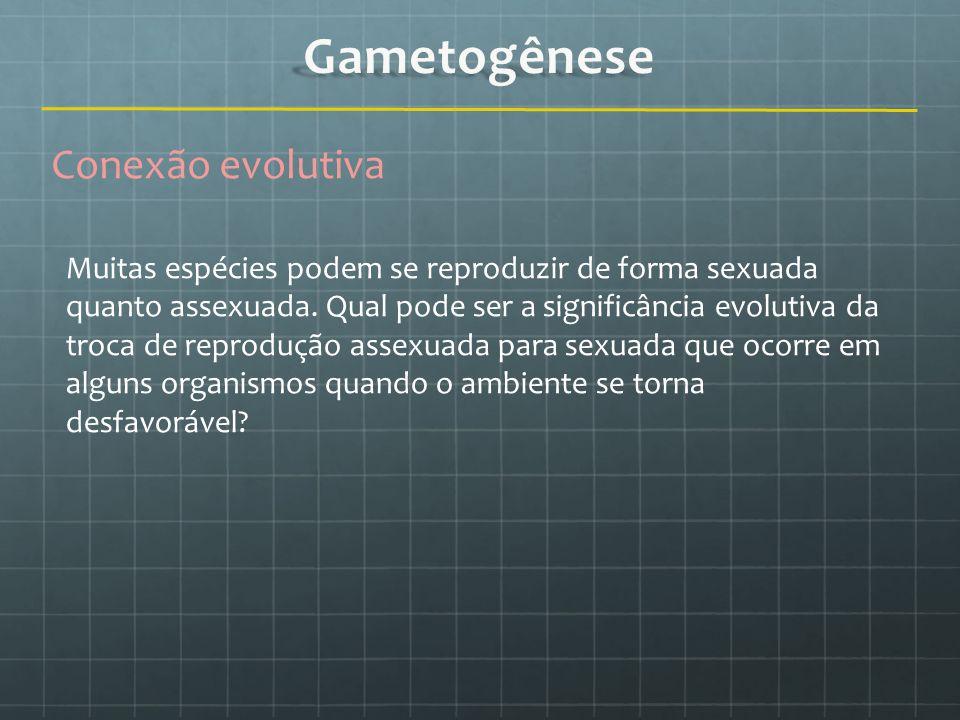 Gametogênese Conexão evolutiva
