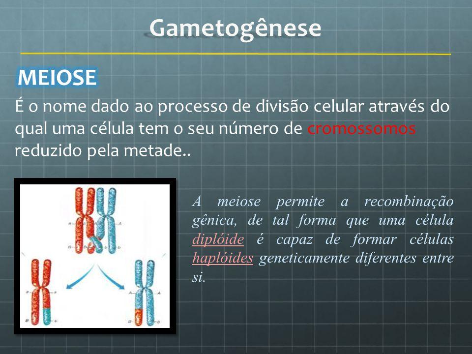 Gametogênese MEIOSE. É o nome dado ao processo de divisão celular através do qual uma célula tem o seu número de cromossomos reduzido pela metade..