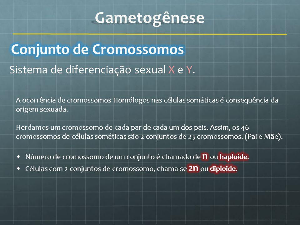 Gametogênese Conjunto de Cromossomos
