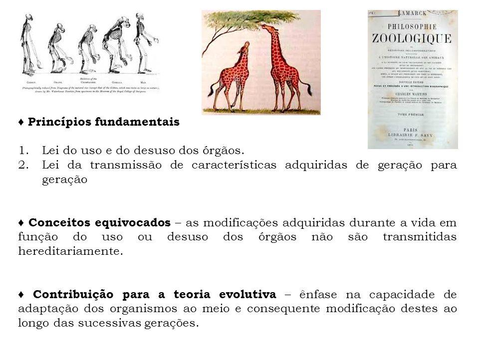 ♦ Princípios fundamentais