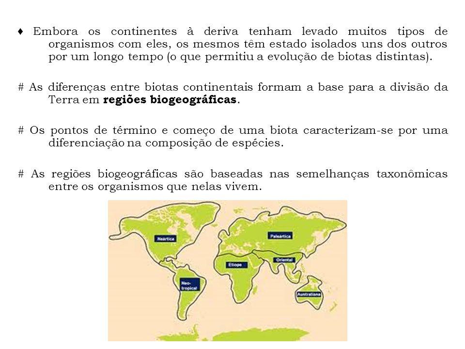 ♦ Embora os continentes à deriva tenham levado muitos tipos de organismos com eles, os mesmos têm estado isolados uns dos outros por um longo tempo (o que permitiu a evolução de biotas distintas).