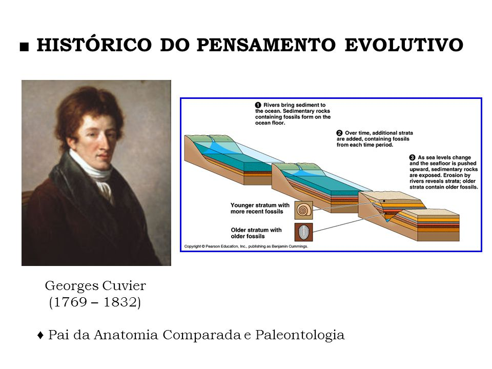 ♦ Pai da Anatomia Comparada e Paleontologia