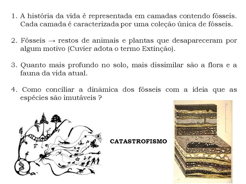 A história da vida é representada em camadas contendo fósseis