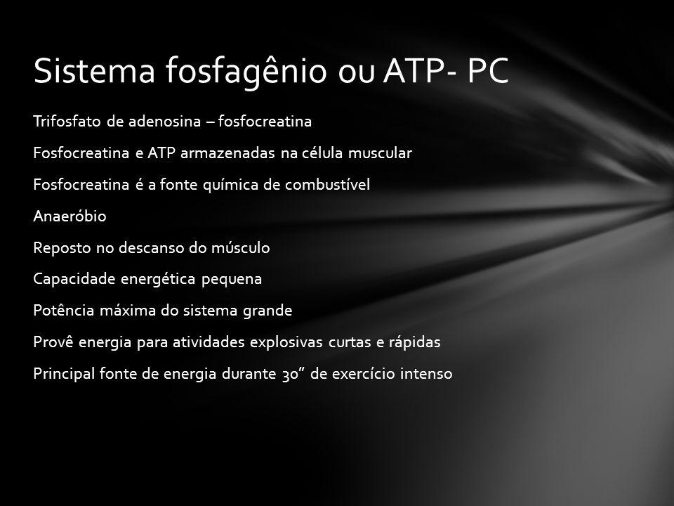 Sistema fosfagênio ou ATP- PC