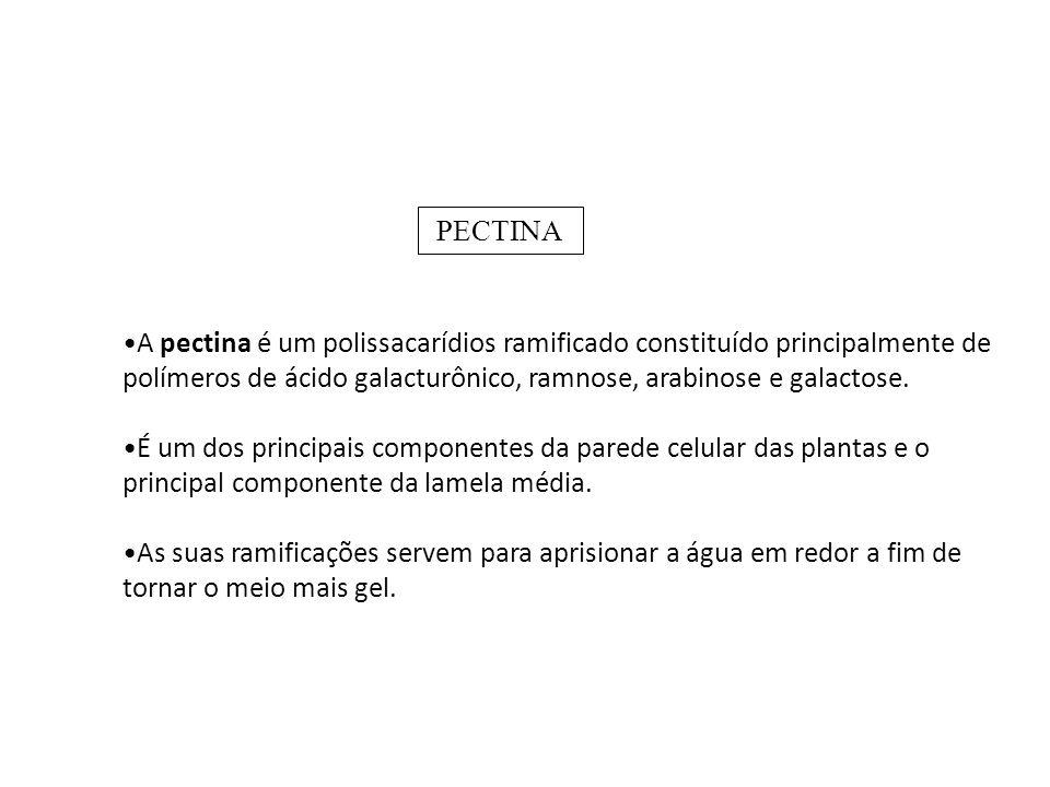 PECTINA A pectina é um polissacarídios ramificado constituído principalmente de polímeros de ácido galacturônico, ramnose, arabinose e galactose.